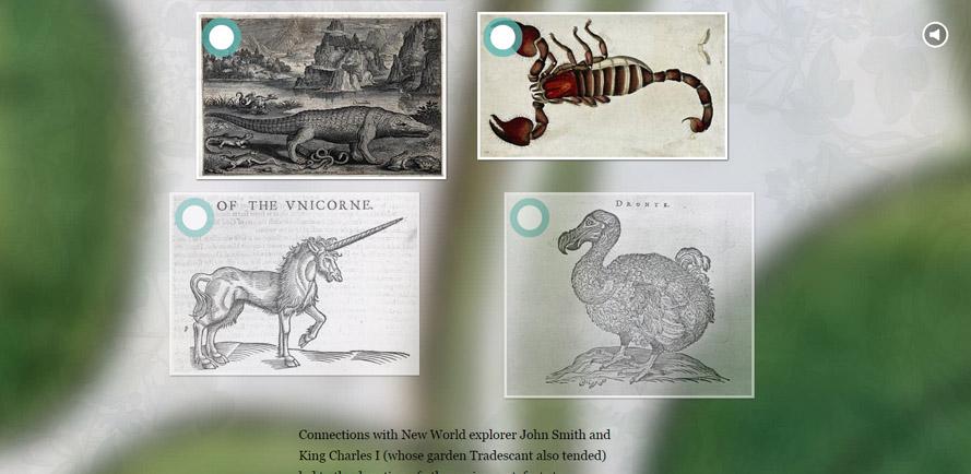 The Collectors dodo